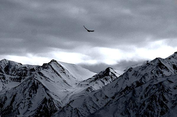 من دوست دارم کوه باشم...